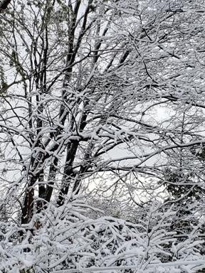 winter-garden-copy-5